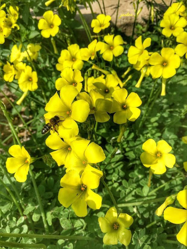 flores-con-abeja-texto-con-firma-2